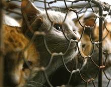China interzice consumul de carne de pisica si de caine