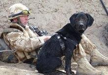 Un labrador va fi decorat cu echivalentul Crucii Victoria pentru animale