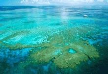 Fosilele de corali vor indica variatiile nivelului apei