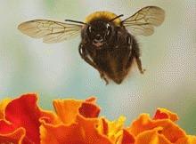 Albinelor le place tutunul si cafeaua