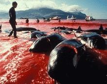 Australia preseaza Japonia sa renunte la vanatoarea de balene