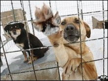 Avocati pentru animale, propunere respinsa in Elvetia