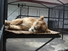 Internetul ameninta speciile rare, avertizeaza conservationistii