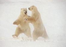 Cele mai bune 40 de imagini din natura, licitate de Ziua Pamantului