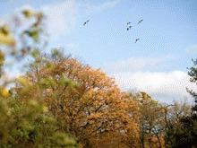 Parcurile sunt esentiale pentru supravietuirea pasarilor migratoare