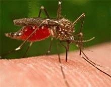 Defrisarile cresc riscul de malarie in Brazilia
