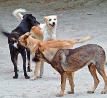 Autoritatea pentru Supravegherea si Protectia Animalelor