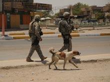650 de caini vagabonzi omorati zilnic in Bagdad