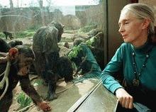 Mama cimpanzeilor face apel la schimbarea mentalitatilor