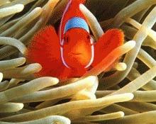 Pestii isi pierd mirosul din cauza aciditatii oceanelor