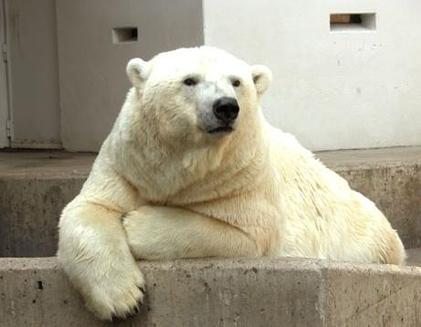Ursul cu rasuflarea de sacal<br>