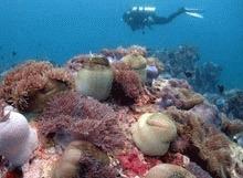 Malaezia interzice scufundarile pentru a salva coralii
