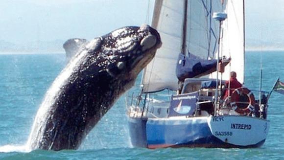 O balena a avariat un vas cu turisti