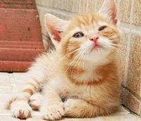 SUA interzic clipurile cu acte de cruzime impotriva animalelor