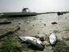 Pestii din Marea Neagra, victimele inundatiilor