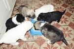 Locuinta-spital pentru animale
