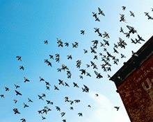 New York: Zgarie-norii sting lumina pentru pasarile migratoare