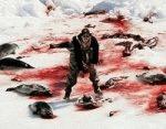 Focile ucise brutal in Canada pot fi comercializate in UE