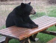 Ursul care a luat masa la cantina