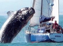 Balenele fug din calea Rosneft