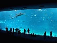 """Delfinii invata sa """"calce apa"""""""