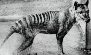 Un milion de dolari pentru un tigru