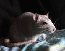 UE impune reguli mai stricte in folosirea animalelor in scopuri stiintifice