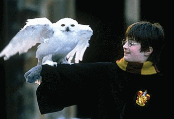 Harry Potter, vinovat pentru disparitia bufnitelor din India