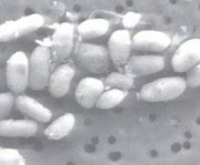 O noua forma de viata descoperita de NASA pe fundul unui lac din California