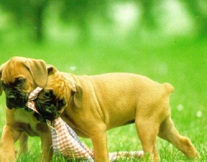 Operatiile estetice pe animale, interzise