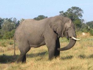 Elefantul de circ abuzat de un ingrijitor roman va fi eliberat intr-un parc safari