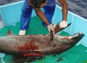 Fonduri europene de 3 milioane euro pentru protejarea rechinilor