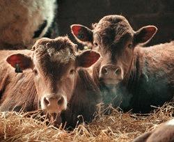 Imbunatatire continua a bunastarii animalelor in UE