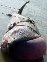 Cadavrul unei balene, descoperit in estul Chinei