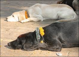 Terapie cu caini maidanezi
