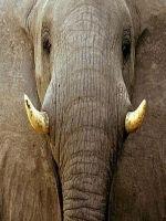 Elefant ucide un ingrijitor in China