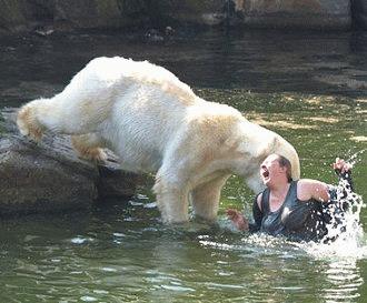 Cele mai terifiante atacuri petrecute la zoo