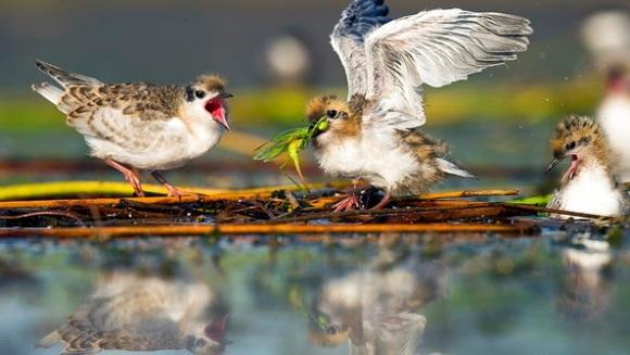 Natura învinge: viaţa salbatică din inima Bucureştiului