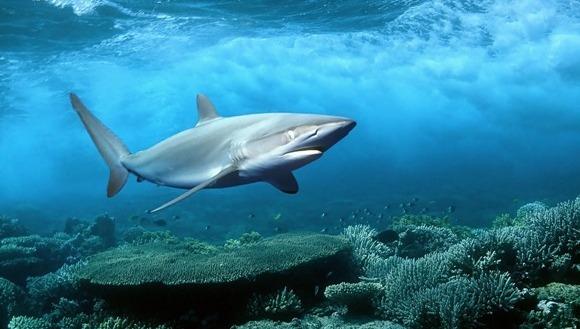 De ce rechinii sunt cele mai cool animale subacvatice