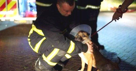 Incendiu devastator la un adăpost pentru animale din Manchester