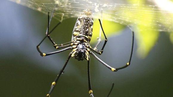 Cu păianjenul sub piele timp de trei zile?