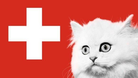 Europenii care mănâncă pisici