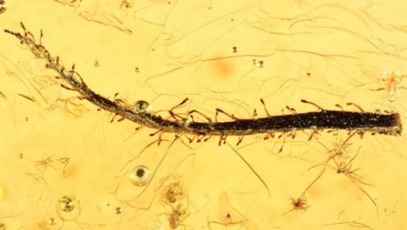 Prima plantă carnivoră din chihilimbar - găsită după 47 de milioane de ani