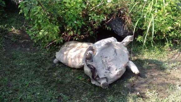 Ţestoasa care şi-a ajutat prietena la nevoie. Cum i-a păzit spatele