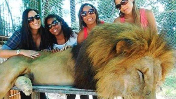 Grădină zoologică, cercetată de autorităţi. Turiştii se îmbrăţişează cu leii, de dragul unui selfie