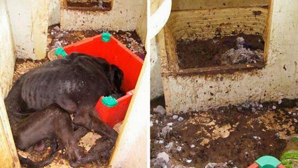 Încarcerat pentru că a lăsat un căţel să moară de foame