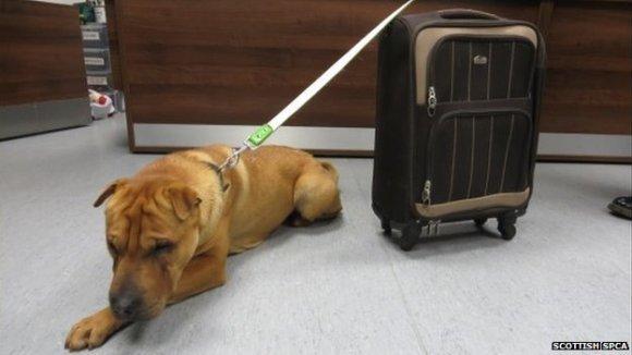 Câine părăsit în gară, cu o valiză lângă el