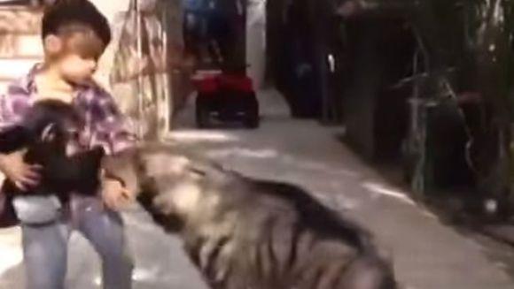 Băiatul care se luptă cu hiena, pentru a-şi apăra puiul de maimuţă