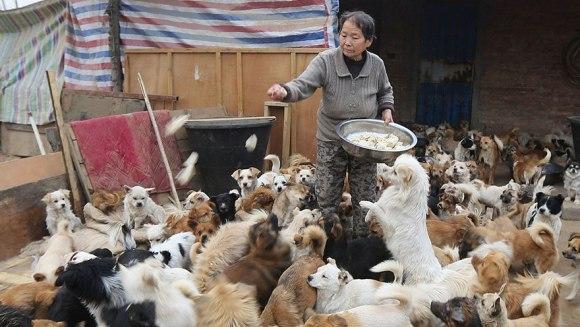 În fiecare zi, aceste femei vârstnice din China se trezesc la 4 dimineața să hrănească 1.300 de câini maidanezi (Galerie Foto)