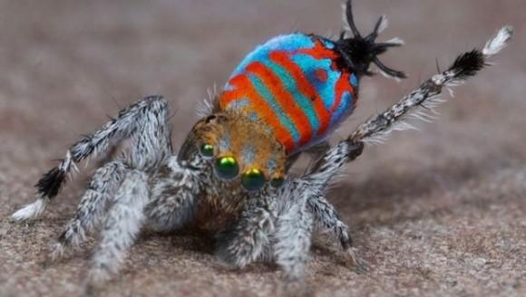Două specii spectaculoase de păianjeni, descoperite în Australia